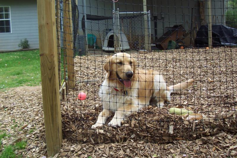 dog run fencing solution